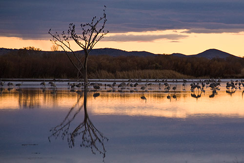 Sunset at Bosque del Apache NWR