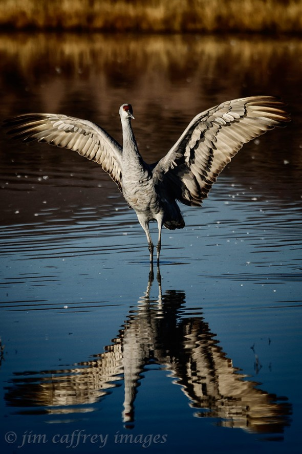 Cranedance