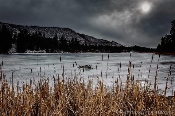 Cattails-Fenton-Lake