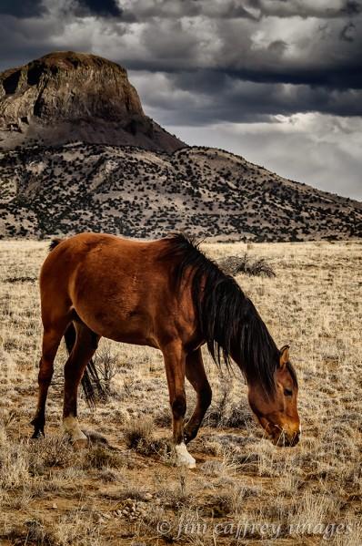 Equus-Cabezon