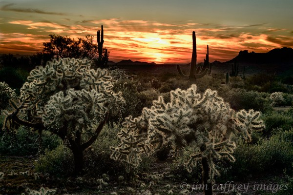 Cholla-Sunset