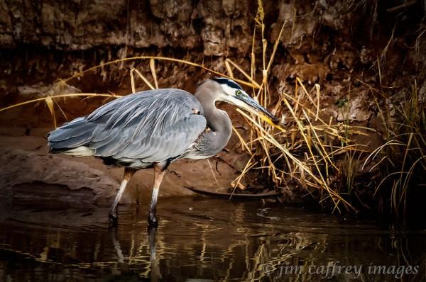 Quintessential-Heron