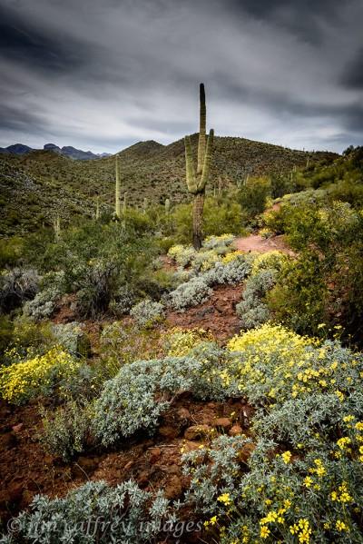 The-Bloomin'-Desert