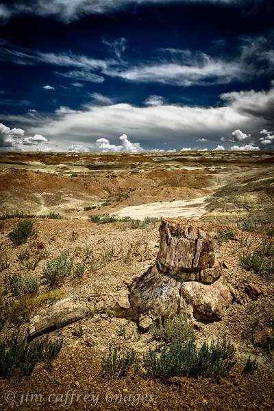 Pertrified-Stump-Burnham-Badlands