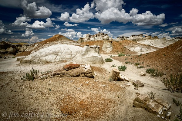 Petrified-Firewood-Burnham-Badlands