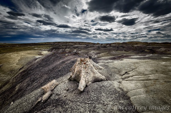 Petrified-Stump-Fossil-Forest-2