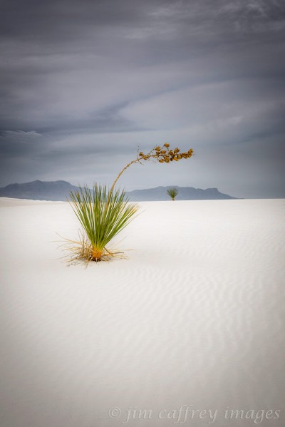 Out-There-On-The-Dunes