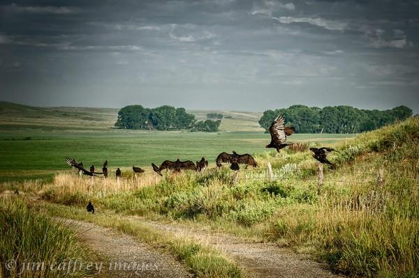 Vulture-Idyll
